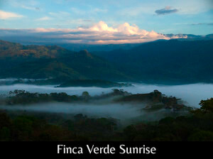 View from the porch at sunrise from Finca Verde, Platanillo, Costa Rica