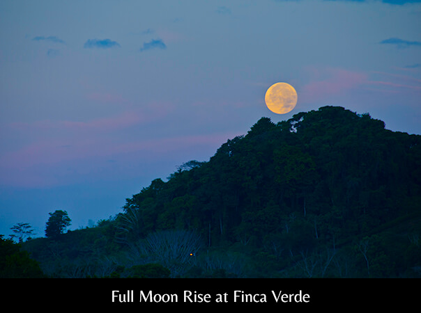 Full Moon Rise at Finca Verde