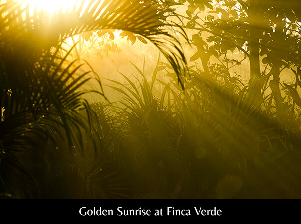 Golden Sunrise at Finca Verde