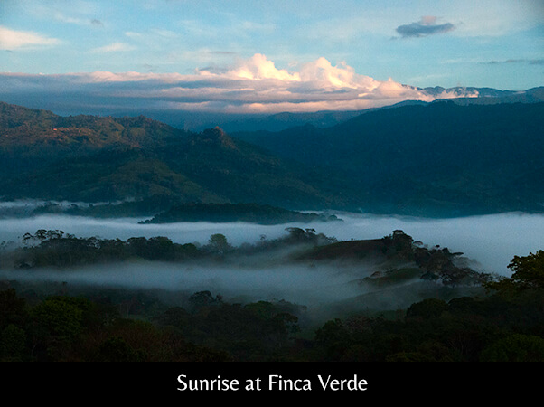 Sunrise at Finca Verde